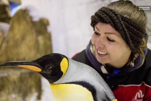 تور دبی؛ ملاقات با پنگوئنها و اسکی روی یخ