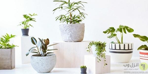 گل و گیاه یک رطوبت ساز طبیعی