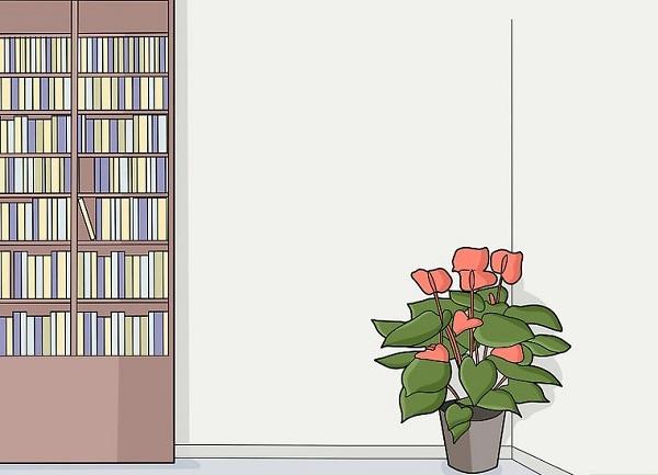 استفاده از گیاهان در آپارتمان