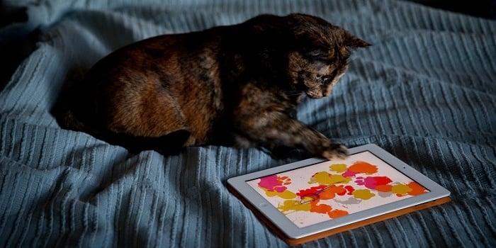 میلیونها بازی برای گوشیهای هوشمند طراحی شدهاند که میتوانند شما را سرگرم کنند. بازیها در گروههای مختلفی دستهبندی میشوند و حتی بازیهای زیادی برای ناشنوایان، نابینایان و... وجود دارد. علاوه بر انسانها، حیوانات خانگی 🐱 هم میتوانند از این بازیها استفاده کنند و سرگرم شوند. در این مطلب از انزل وب به معرفی و دانلود 7 تا از بهترین بازی های گوشی اندروید برای گربه ها میپردازیم.