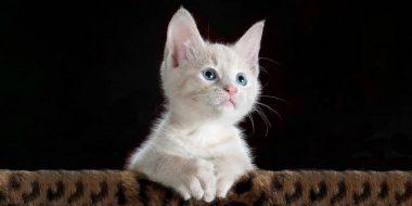 آموزش ویرایش عکس حرفه ای حیوانات با فتوشاپ