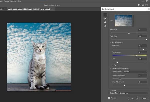 فتوشاپ عکس گربه