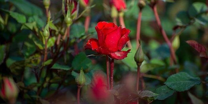 خرید گل برای مراسمات و مناسبت های خاص